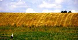 Zagrożenia związane z inwestowaniem w ziemię rolną